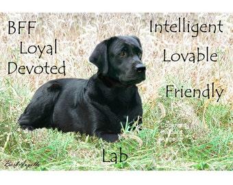Black Lab Traits, Black Lab Metal Art Print, Black Lab Gift, Black Labrador Retriever