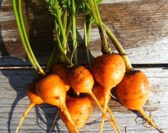 Paris Market Carrots from my garden,Mini round carrots heirloom seeds 100 seeds