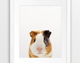 Guinea Pig Print, Nursery Animal Wall Art, Animal Photography, Kids Pet, Modern Art, Nursery Decor, Kids Room Printable Art Digital Download