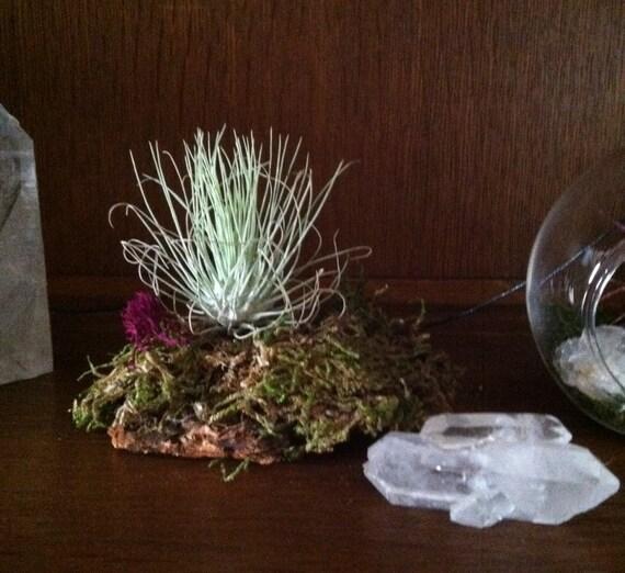 Crystal Cluster for Micro, Fairy, Garden, Terrarium, Altar, Double Terminated, Abundance, Meditation Crystal, Sedona, Metaphysical, Display