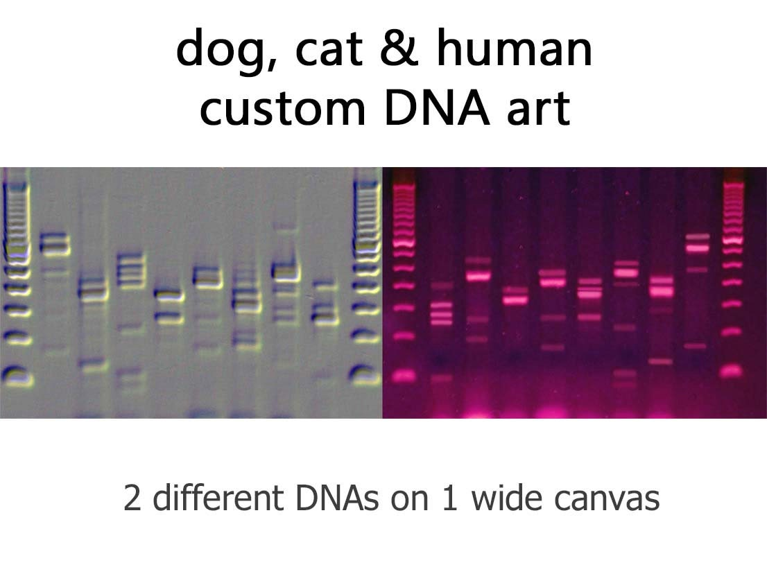 Custom dogs cats people dna canvas genetics wall art for Personalized dna art