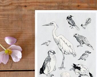 Postkarte Vögel Neuseelands, schöne Vogel Illustration, Neuseeland Andenken, Vogel Postkarte, Natur Postkarte, Reise Postkarte, neu im Shop