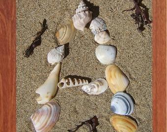 A, Shell Alphabet, Printable Wall Art, Child, Shells, Beach, Spell, Summer,Inspirational, Motivational, Instant Digital Download,