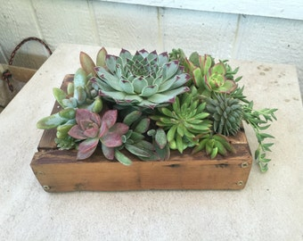 succulent arrangement in long rustic wood planter by nothinglikeus. Black Bedroom Furniture Sets. Home Design Ideas