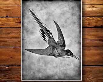 Hummingbird Print, Antique Decor, Bird Illustration  BW445