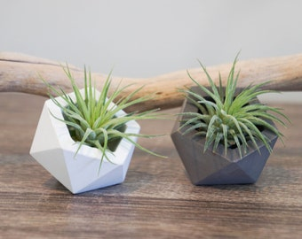 Geometric White cement planter (Small 5x5cm)