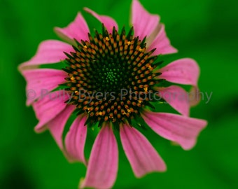 Floral Spin Nature Art Photography