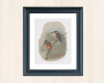 Vintage Kingfisher Cross Stitch Pattern Ornithology Download Bird Embroidery Kingfisher Pattern Bird Embroidery Antique Gift Kingfisher