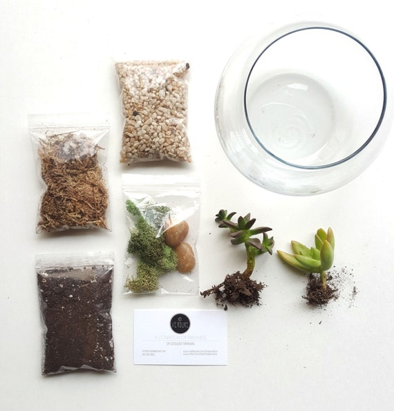 diy terrarium kit terrarium gift succulent unique by shopverdure. Black Bedroom Furniture Sets. Home Design Ideas