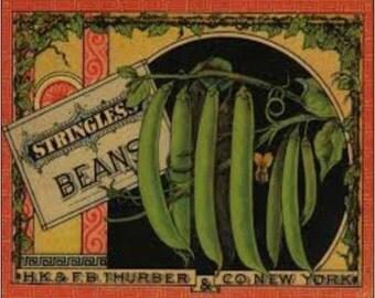 "2"" x 3"" Magnet Vintage Stringles Green Beans MAGNET"