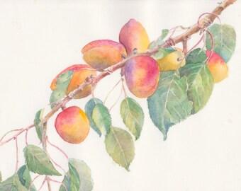 Apricots Original Watercolor Painting, Fruit Watercolor, Kitchen Art, Fresh Ripe Apricot