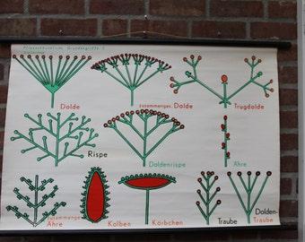 Vintage  Botanical Pull Down Chart  Botanist basic concepts 3 – Flowers  School Chart