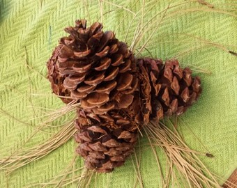 Natural Pine Cone Bouquet
