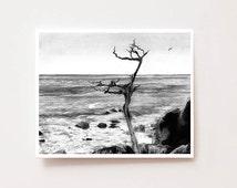 "Charcoal landscape art print -""Ghost tree, Monterey, California"" - Fine art Giclee print, drawing, Wall art, home decor, landscape, scenery"