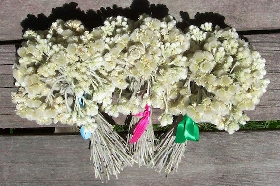 Dried flowers white small craft supplies by for Dried flowers craft supplies