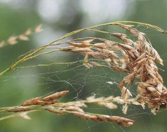 Awaiting Harvest
