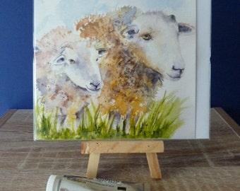 Sheep  - Greetings Card
