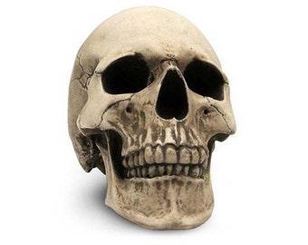 Skull Replica 1:1, handmade (plaster)