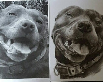 Charcoal Pet Portraits reserved Tracey Davies