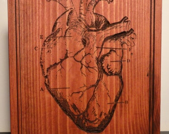 Carved Anatomical Heart Scientific Diagram