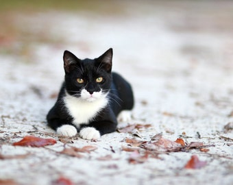 Black Kitten Fine Art Photography