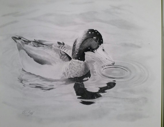 Mallard duck swimming, waterfowl, hunting picture, graphite & charcoal pencil drawing print