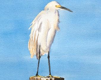 Florida Egret Fine Art Watercolor Print