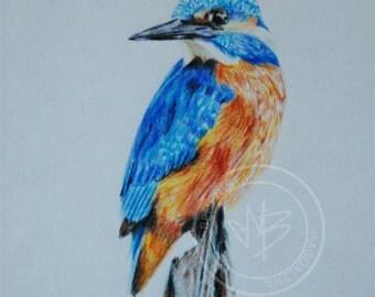 watercolor bird, colored pencil drawing - original drawing