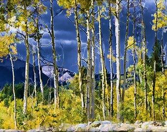 ASPEN TREES in Autumn Light
