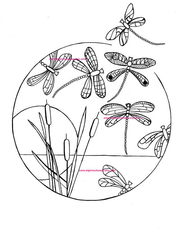 dragonfly pictures coloring pages - photo#39