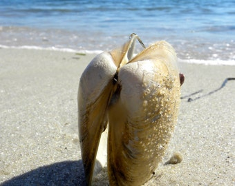 Clams on the Shore
