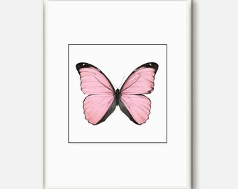 Butterfly Art Print, Beautiful Butterfly Poster, Butterfly Wall Art, Natural History Giclee Print,Nature Print,Gift for Her,Pink Prints