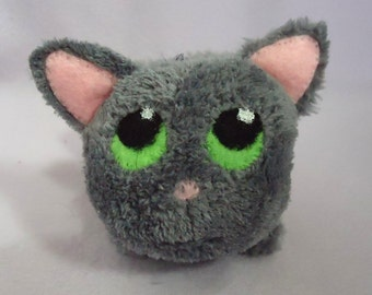 little gray cat.