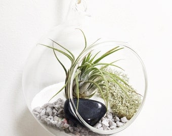 Virgo September Sapphire Air Plant Terrarium Garden Kit • tillandsia birthstone crystal birthday personalize gift planter airplant customise