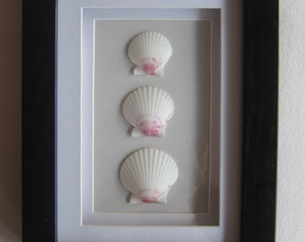 Frame-Wood- Scallop Seashells- Coastal Decor, Beach Decor, Nautical Decor