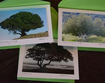 blank notecards - trees (3pk)