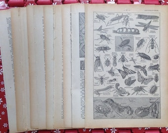 Old French papers dictionary pages old book pages paper ephemera Insects  crustaceans