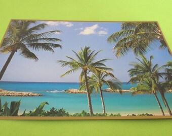 Palm Tree Peek a Boo Postcard