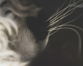 The Cat's Whiskers, 2 Original Photographic Images, Instant Digital Download, Wall Art, Decor, Pet, Animal Photography, black & white, sepia