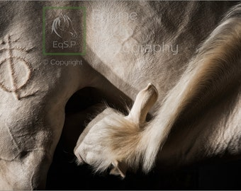 Andalusian Abstract - Mare & Foal, Fine Art Print, Equine Photography