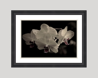 Custom framed 18x12 inch Classic Orchids