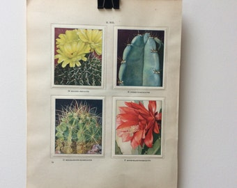 Vintage Botanical Picture