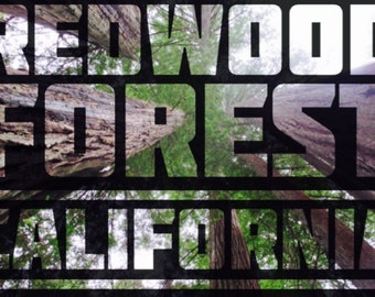 Redwood Forest Typography