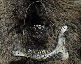 the mandible of roe deer