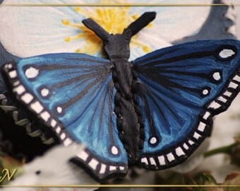 The confusing Butterfly - The confu butterfly