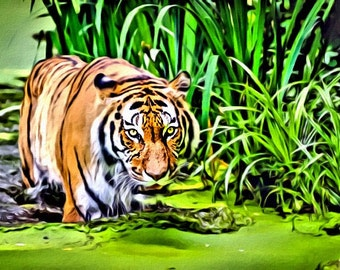 Siberian Tiger - Print or Canvas