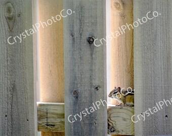 Chipmunk Photography; Animal Photography; Fine Art Photography; Animals; Chipmunk; Fence; Brown; Rodents; Summer Day; Peek-a-Boo; Digital