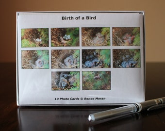 Birth of a Bird Photo Note Cards