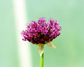 Flower, Nature Print, Nature Photography, Macro Photography