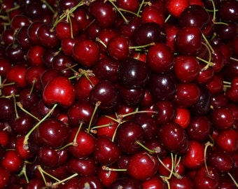 Free Shipping! 10 cherry-tree seeds - delicious fruit